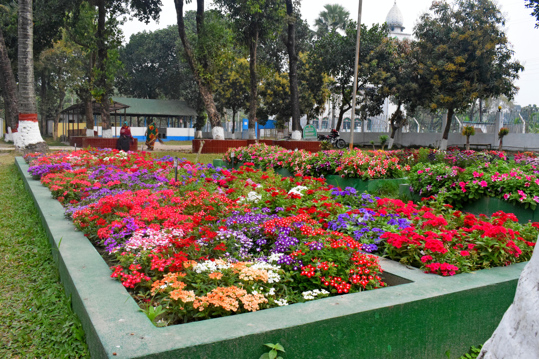 বীর উত্তম শহীদ সামাদ স্কুল এন্ড কলেজ এর ফুলের বাগান- মালী মোঃ শহীদুল ইসলাম। 2020